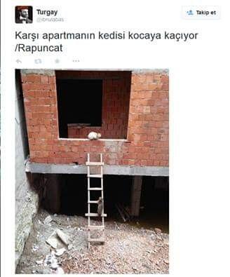 FB_IMG_1541356569811.jpg